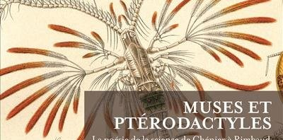 Muses, ptérodactyles et pataticulture