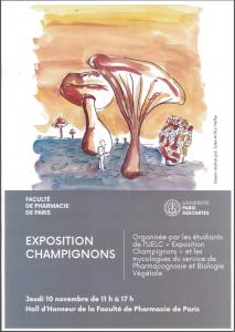exposition_champignons