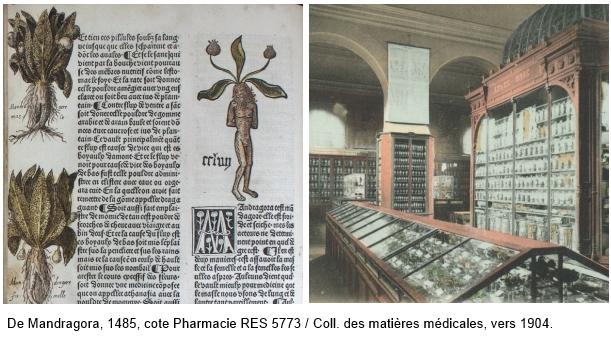 Mandrago et matière médicale