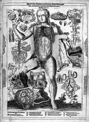 Planche ouverte montrant l'intérieur du thorax et de l'abdomen, Remmelin, 1661