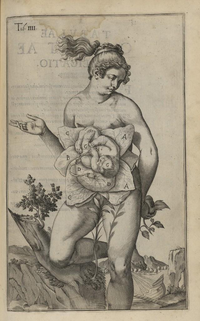 Pl. IV du De formato foetu de Van der Spieghel