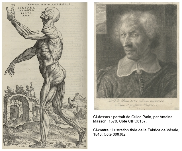 Illustrations Vésale et Patin