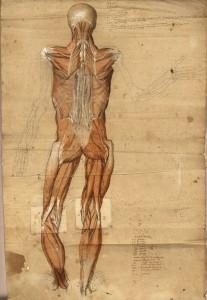 Myologie du corps entier (Ms 27)