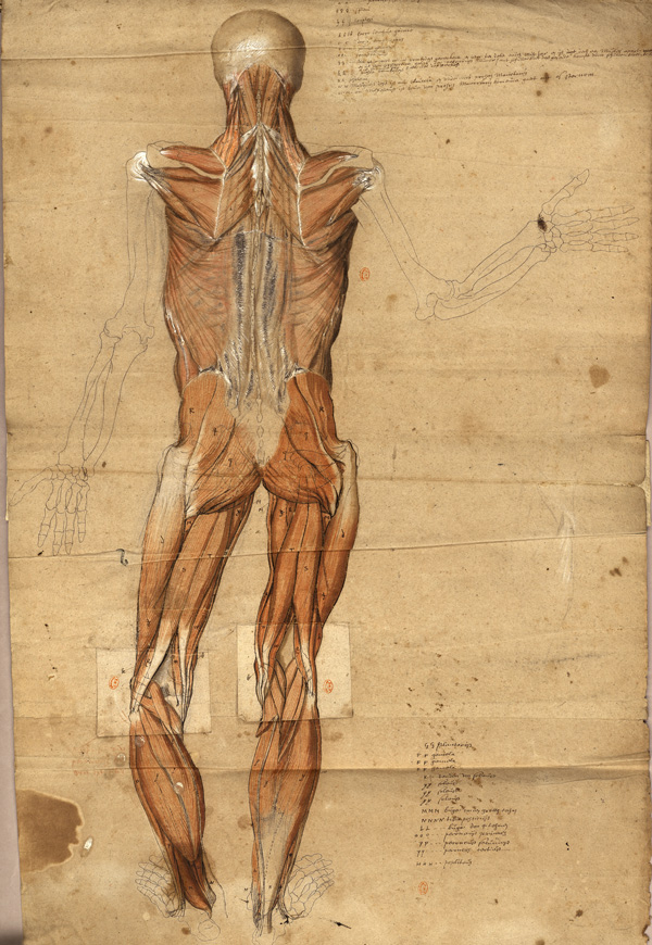 After 270 years of oblivion, Van Horne\'s atlas of anatomy, a jewel ...