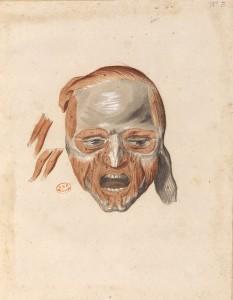 Myologie de la tête (Ms 28)