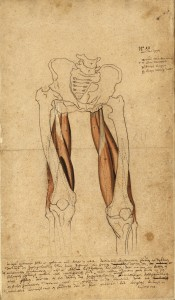 Myologie des membres inférieurs avec colophon (Ms 29)