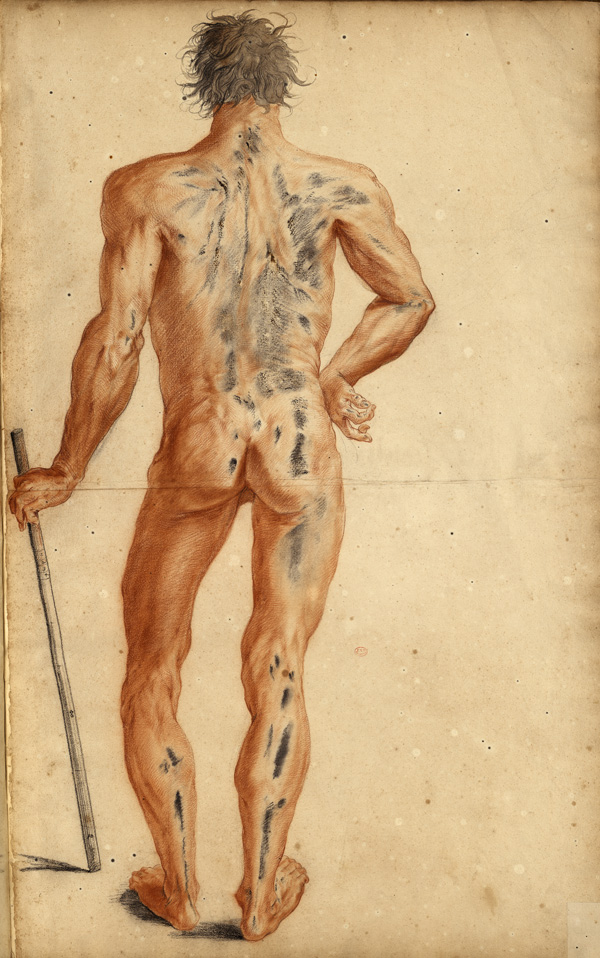Large myology of the full body: live subject leaning on a graduated measuring rod (Ms 30; the whites have turned to soot black over time)