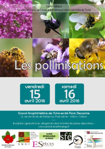 pollinisations