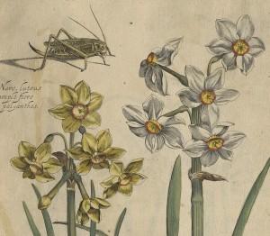 Fleurs illustrant Rabel