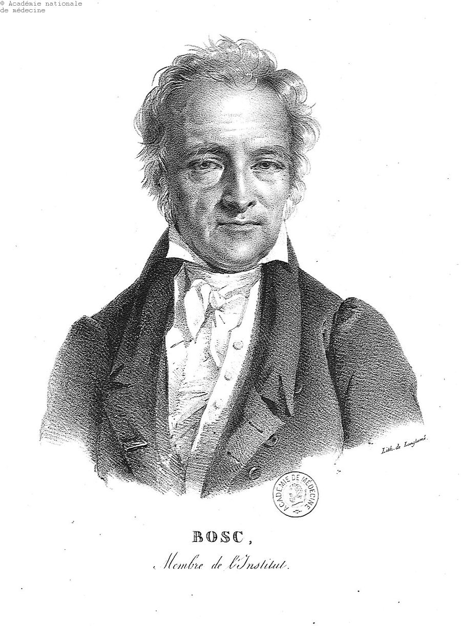 Bosc, Louis-Augustin-Guillaume (1759-) -  - anmpx10x0349