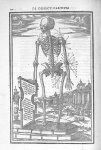 Capita musculorum tibi designatur his numeris - De dissectione partium corporis humani libri tres, à [...]