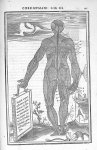 Musculi corporis posteriores - De dissectione partium corporis humani libri tres, à Carolo Stephano, [...]