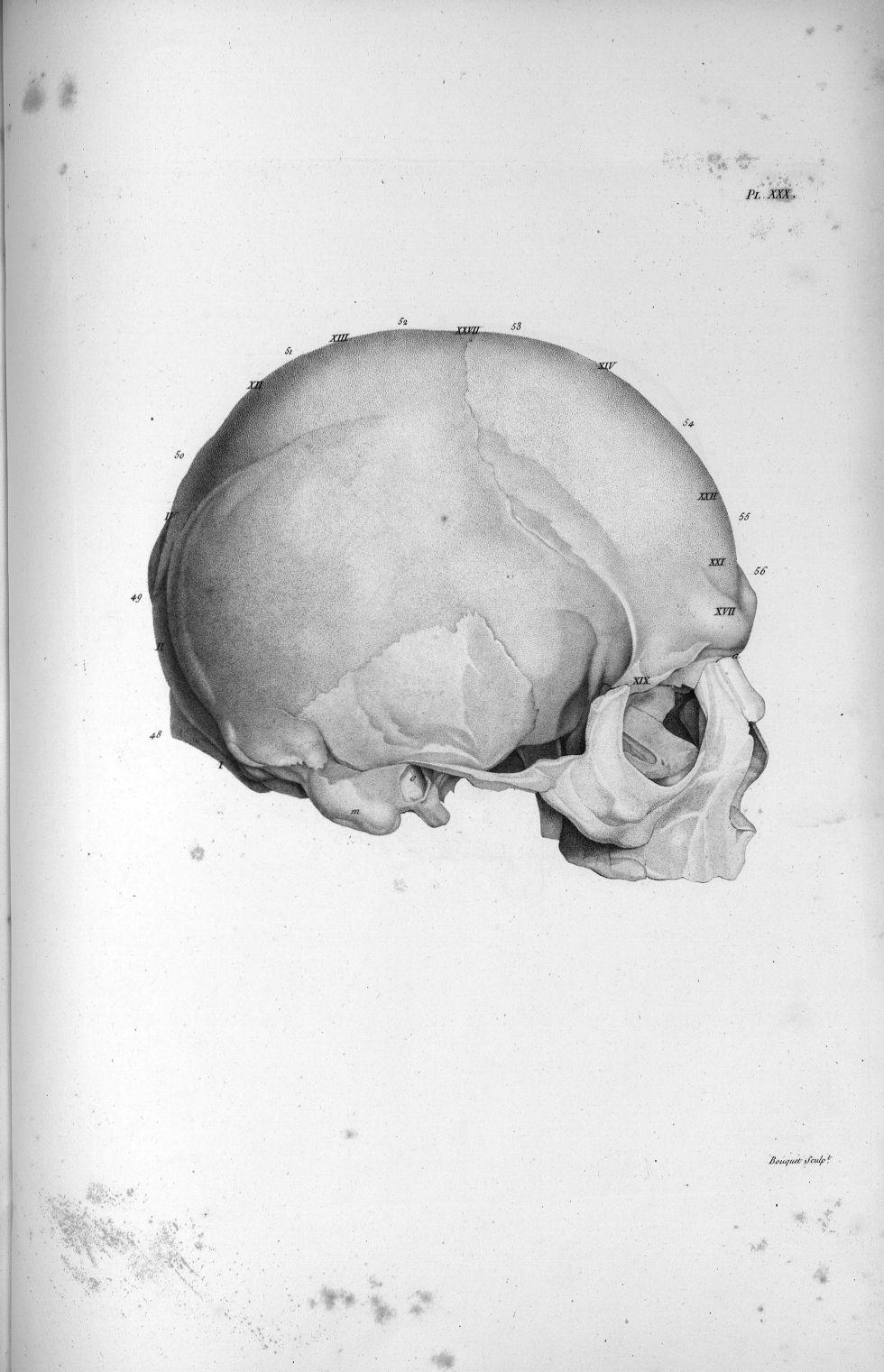 Pl. XXX. Beau crâne d'un ex-jésuite, grand prédicateur - Anatomie et physiologie du système nerveux  [...] - Anatomie. Neurologie. Crânes. Phrénologie. 19e siècle (France) - med00575x02x0355