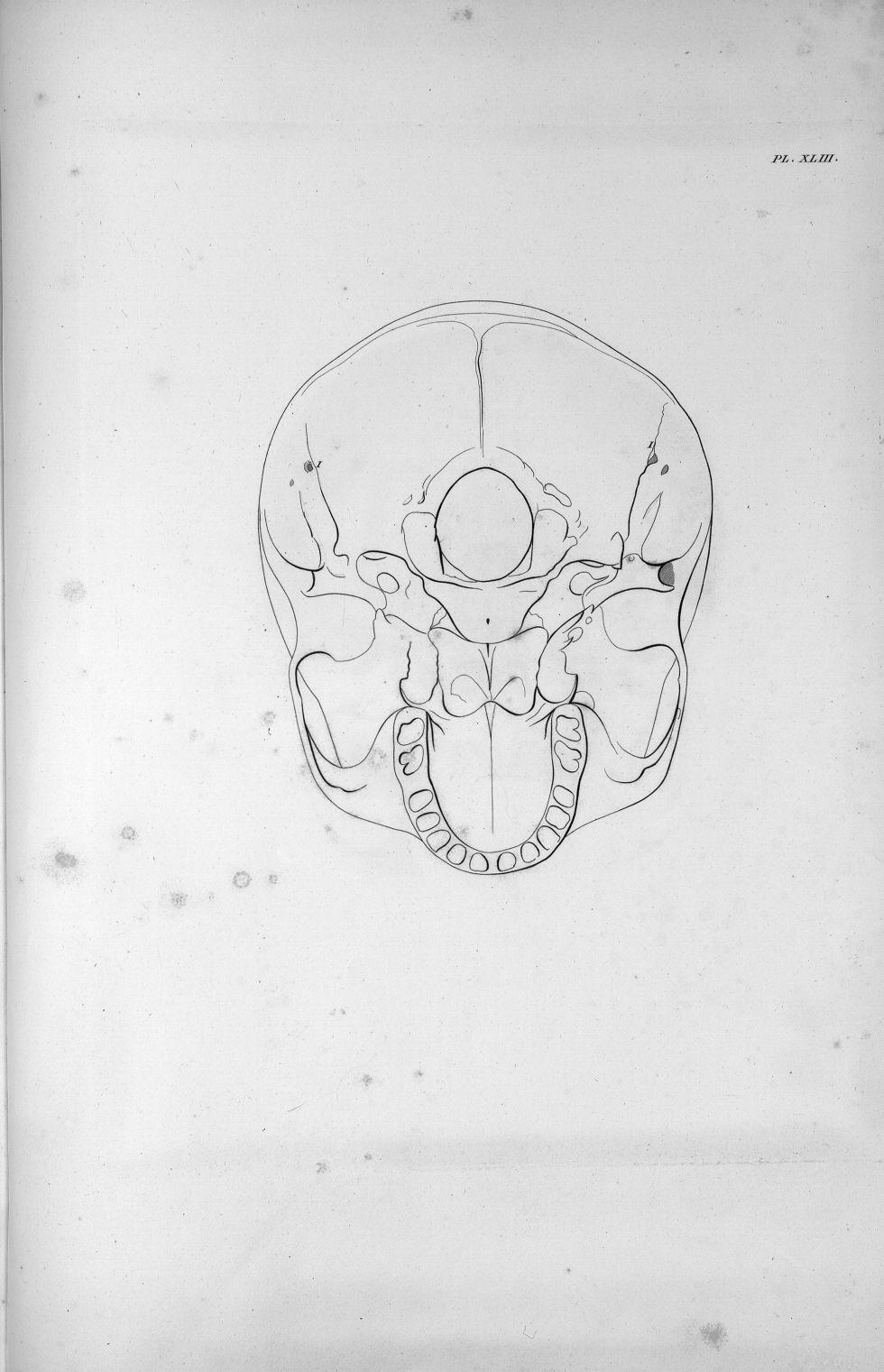 Pl. XLIII. La base du crâne d'un adulte avec le développement ordinaire du cervelet - Anatomie et ph [...] - Anatomie. Neurologie. Crânes. 19e siècle (France) - med00575x02x0381
