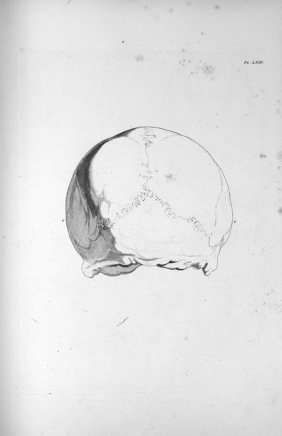 Pl. LXIII. Partie postérieure du crâne d'un homme très-courageux - Anatomie et physiologie du systèm [...] - Anatomie. Neurologie. Crânes. Phrénologie. 19e siècle (France) - med00575x03x0317