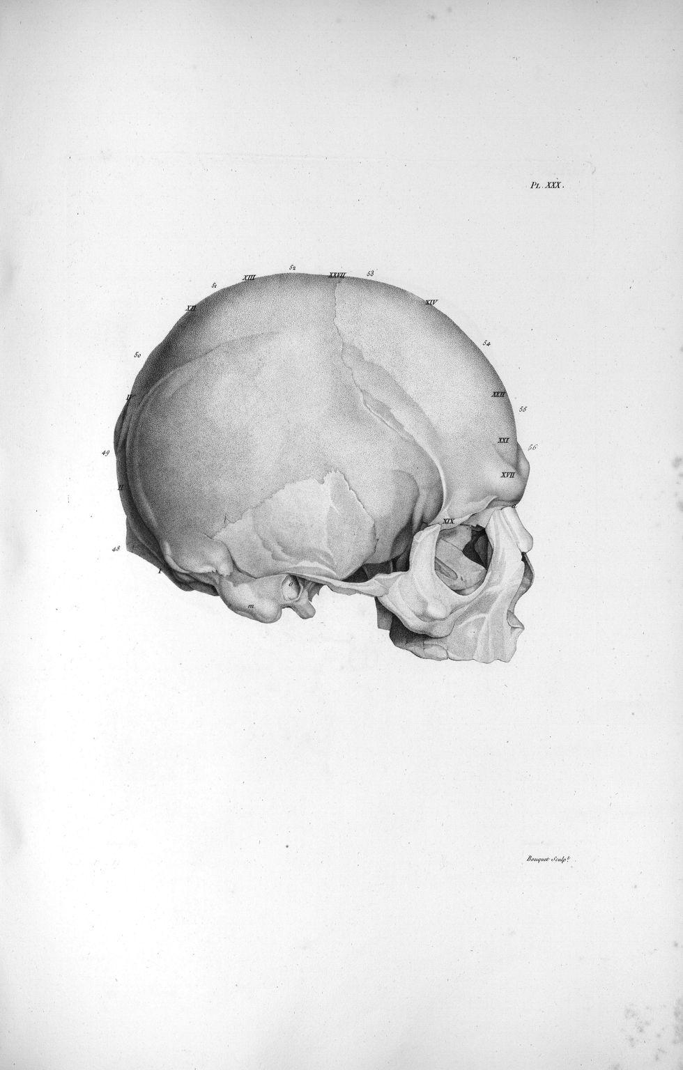 Pl. XXX. Beau crâne d'un ex-jésuite, grand prédicateur - Anatomie et physiologie du système nerveux  [...] - Anatomie. Neurologie. Crânes. Phrénologie. 19e siècle (France) - med00575xatlasx0040