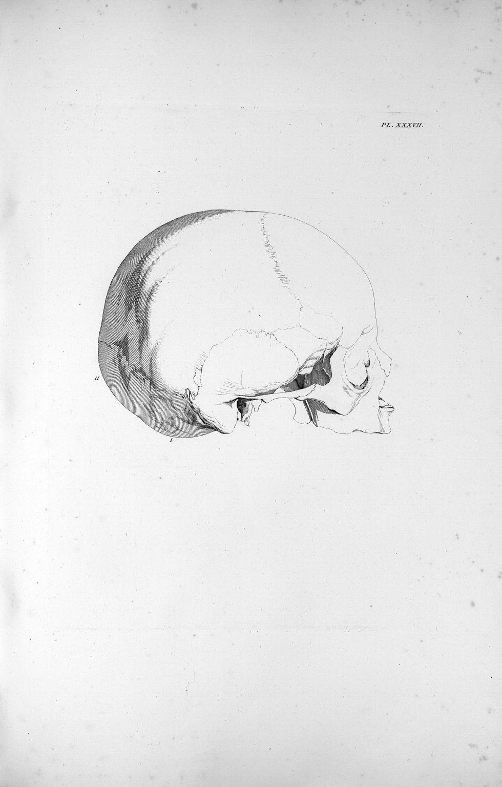 Pl. XXXVII. Crâne d'un garçon de dix à douze ans - Anatomie et physiologie du système nerveux en gén [...] - Anatomie. Neurologie. Crânes. 19e siècle (France) - med00575xatlasx0047