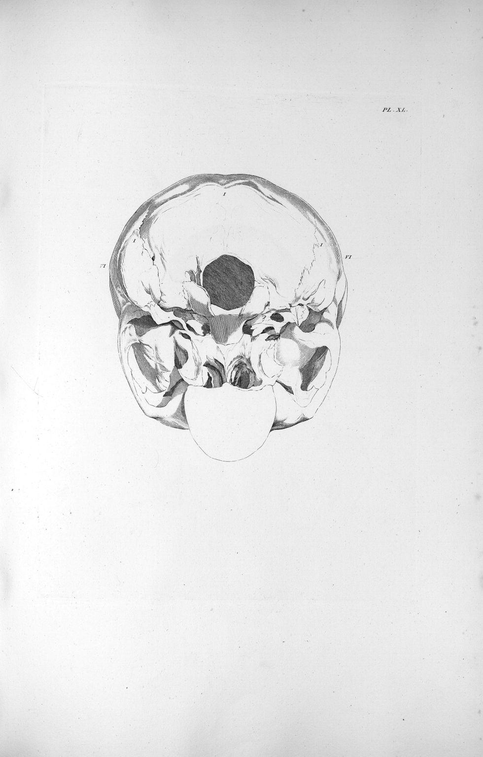 Pl. XL. Base du crâne d'un aliéné érotique avec un très-grand développement du cervelet - Anatomie e [...] - Anatomie. Neurologie. Crânes. Phrénologie. 19e siècle (France) - med00575xatlasx0050