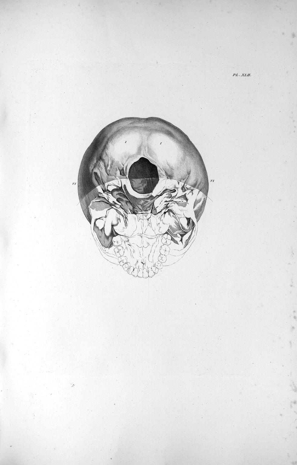 Pl. XLII. La base du crâne d'un garçon de deux à douze ans - Anatomie et physiologie du système nerv [...] - Anatomie. Neurologie. Crânes. 19e siècle (France) - med00575xatlasx0052