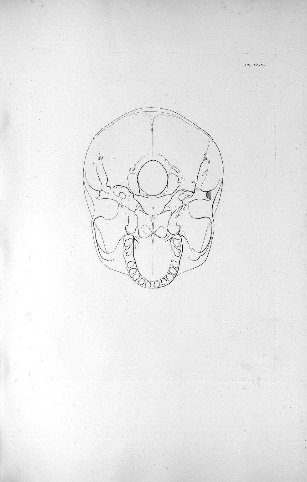 Pl. XLIII. La base du crâne d'un adulte avec le développement ordinaire du cervelet - Anatomie et ph [...] - Anatomie. Neurologie. Crânes. 19e siècle (France) - med00575xatlasx0053