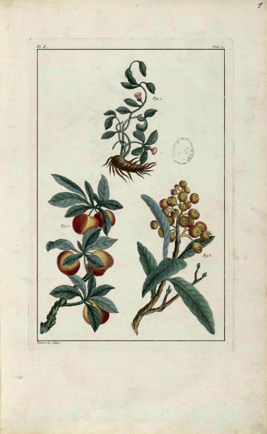 Planche I - Herbier ou collection des plantes médicinales de la Chine d'après un manuscrit peint et  [...] - Botanique. Plantes (médecine). Chine. 18e siècle - med01989x0004