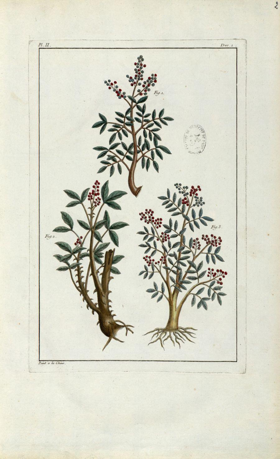 Planche II - Botanique. Plantes (médecine). Chine. 18e siècle - med01989x0005