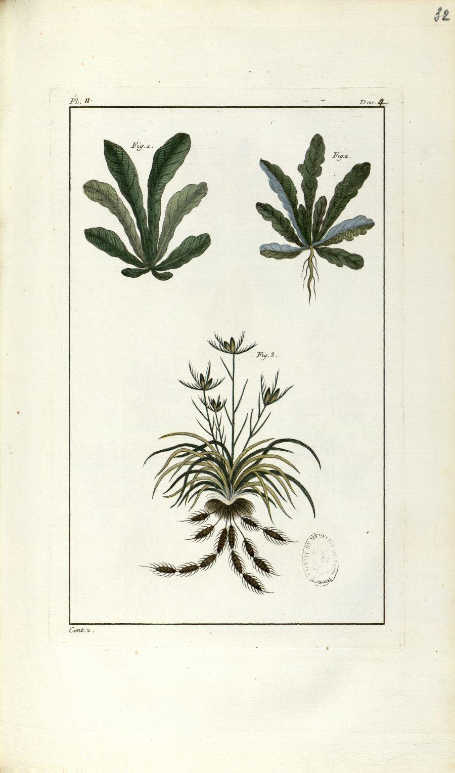 Planche II. Dec. 4. Cent. 2 - Herbier ou collection des plantes médicinales de la Chine d'après un m [...] - Botanique. Plantes (médecine). Chine. 18e siècle - med01989x0035