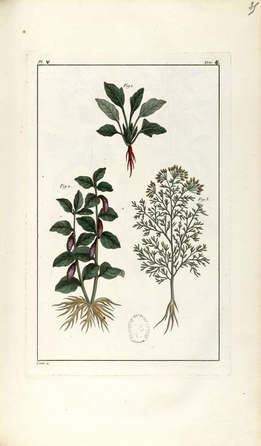 Planche V. Dec. 4. Cent. 2 - Herbier ou collection des plantes médicinales de la Chine d'après un ma [...] - Botanique. Plantes (médecine). Chine. 18e siècle - med01989x0038