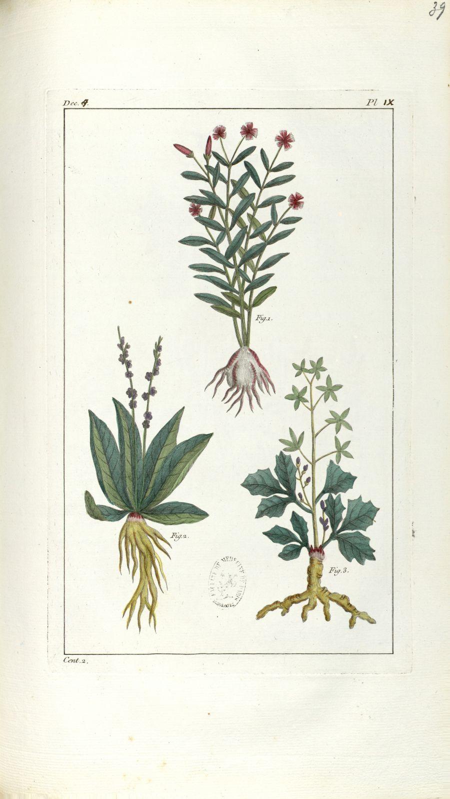 Planche IX. Dec. 4. Cent. 2 - Herbier ou collection des plantes médicinales de la Chine d'après un m [...] - Botanique. Plantes (médecine). Chine. 18e siècle - med01989x0042