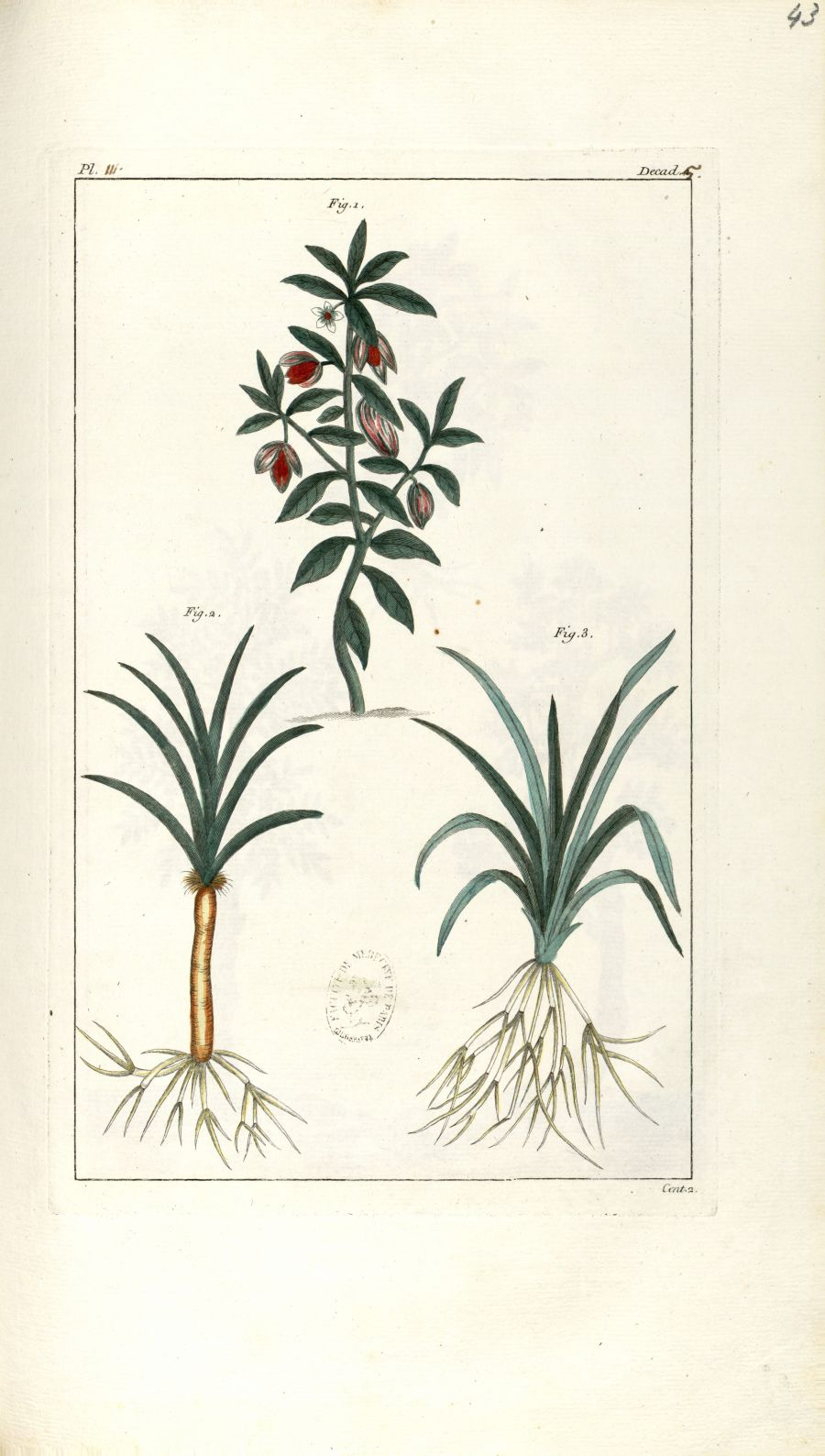 Planche III. Decad. 5. Cent. 2 - Herbier ou collection des plantes médicinales de la Chine d'après u [...] - Botanique. Plantes (médecine). Chine. 18e siècle - med01989x0046