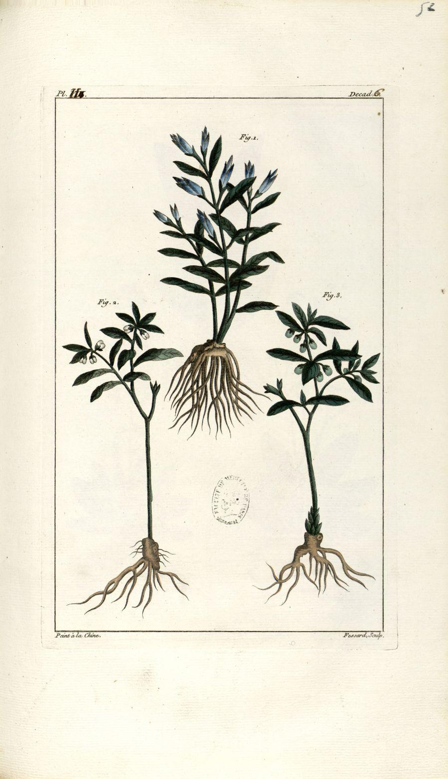 Planche II. Decad. 6 - Herbier ou collection des plantes médicinales de la Chine d'après un manuscri [...] - Botanique. Plantes (médecine). Chine. 18e siècle - med01989x0055