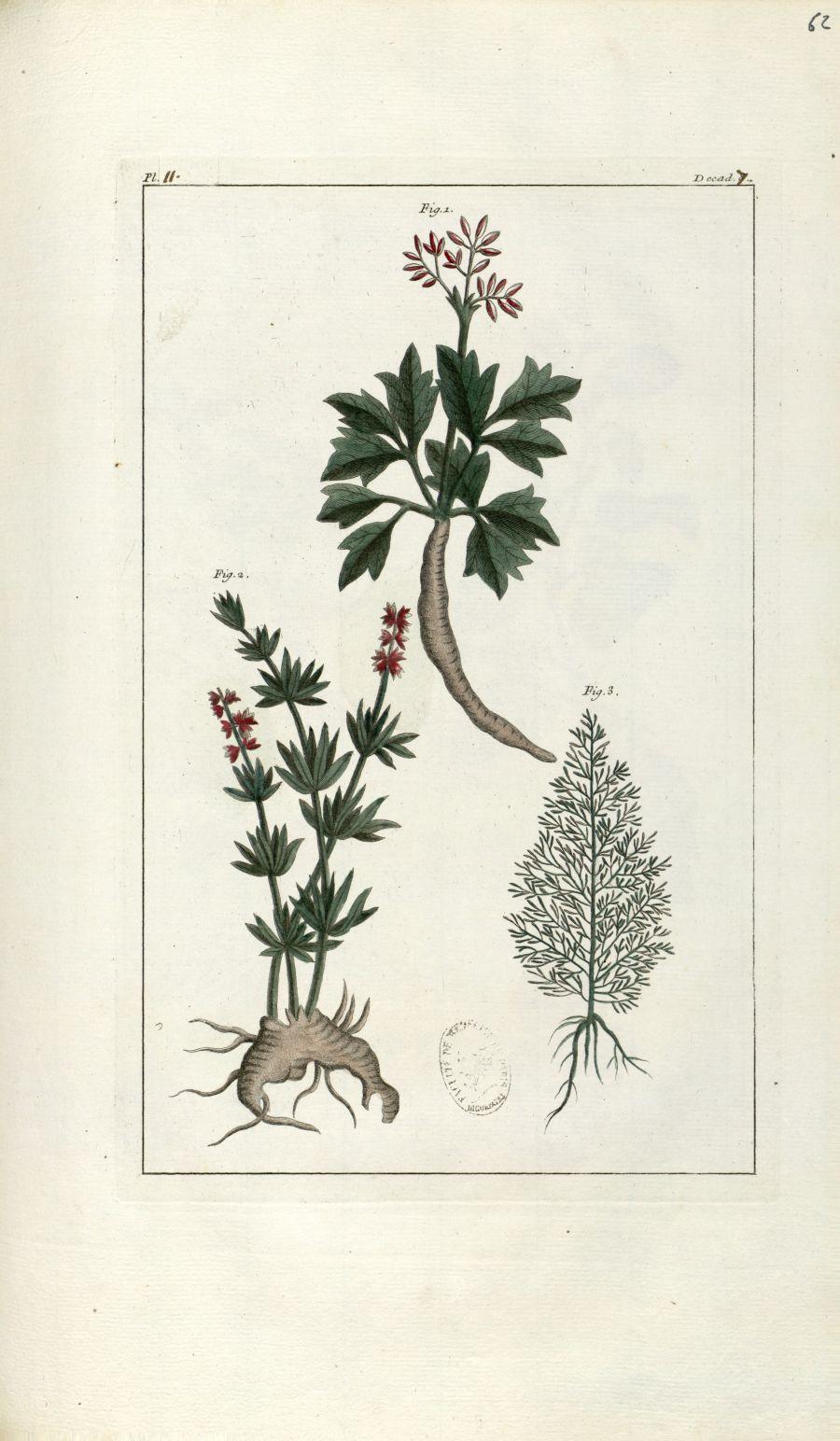 Planche II. Decad. 7 - Herbier ou collection des plantes médicinales de la Chine d'après un manuscri [...] - Botanique. Plantes (médecine). Chine. 18e siècle - med01989x0065