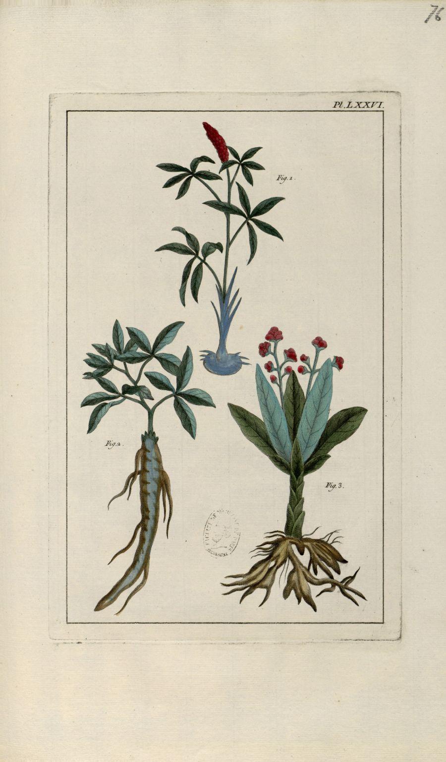 Planche LXXVI - Herbier ou collection des plantes médicinales de la Chine d'après un manuscrit peint [...] - Botanique. Plantes (médecine). Chine. 18e siècle - med01989x0079