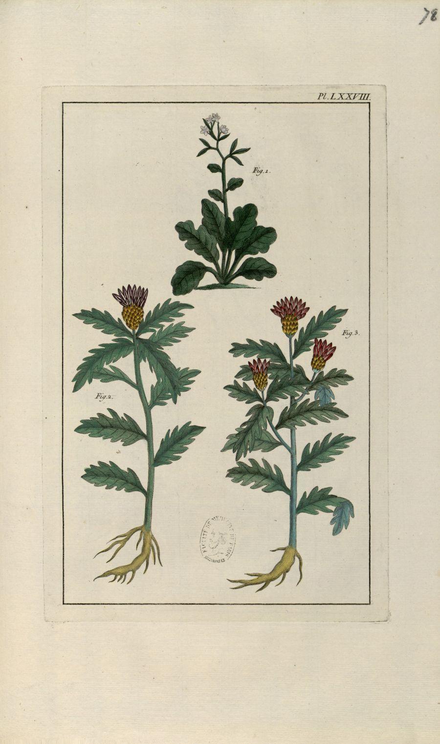 Planche LXXVIII - Herbier ou collection des plantes médicinales de la Chine d'après un manuscrit pei [...] - Botanique. Plantes (médecine). Chine. 18e siècle - med01989x0081