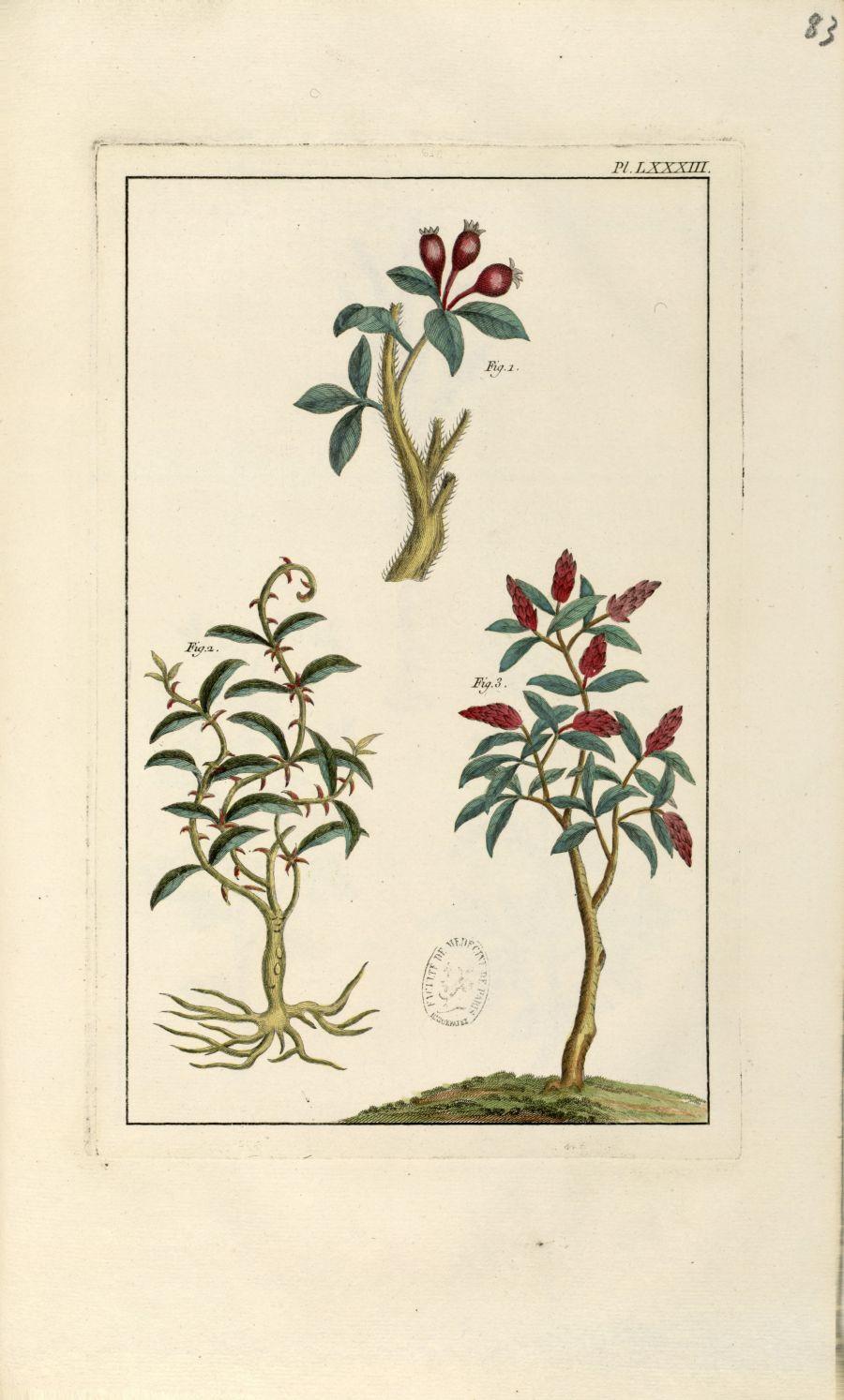 Planche LXXXIII - Herbier ou collection des plantes médicinales de la Chine d'après un manuscrit pei [...] - Botanique. Plantes (médecine). Chine. 18e siècle - med01989x0086