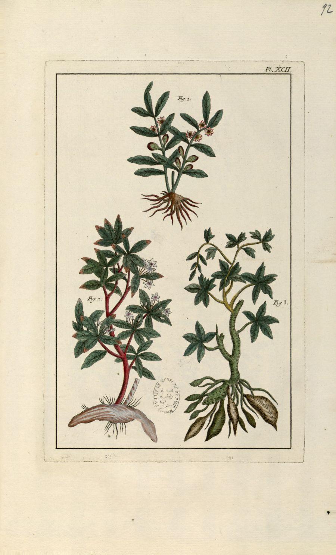 Planche XCII - Herbier ou collection des plantes médicinales de la Chine d'après un manuscrit peint  [...] - Botanique. Plantes (médecine). Chine. 18e siècle - med01989x0095