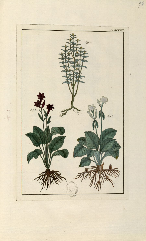 Planche XCVIII - Herbier ou collection des plantes médicinales de la Chine d'après un manuscrit pein [...] - Botanique. Plantes (médecine). Chine. 18e siècle - med01989x0101