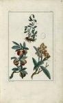 Planche I - Herbier ou collection des plantes médicinales de la Chine d'après un manuscrit peint et  [...]