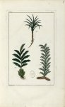 Planche III - Herbier ou collection des plantes médicinales de la Chine d'après un manuscrit peint e [...]