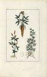 Planche V - Herbier ou collection des plantes médicinales de la Chine d'après un manuscrit peint et  [...]