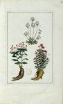Planche VI - Herbier ou collection des plantes médicinales de la Chine d'après un manuscrit peint et [...]