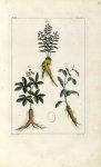 Planche II. Decad. 2 - Herbier ou collection des plantes médicinales de la Chine d'après un manuscri [...]