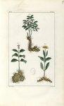 Planche V. Decad. 2 - Herbier ou collection des plantes médicinales de la Chine d'après un manuscrit [...]