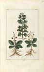 Planche VI. Decad. 2 - Herbier ou collection des plantes médicinales de la Chine d'après un manuscri [...]