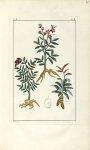 Planche II. Dec. 3. Cent. 2 - Herbier ou collection des plantes médicinales de la Chine d'après un m [...]