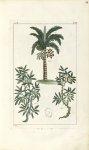 Planche IV. Dec. 3. Cent. 2 - Herbier ou collection des plantes médicinales de la Chine d'après un m [...]