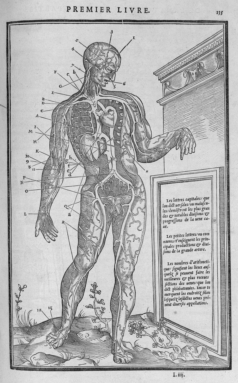 La dissection des parties du corps humain divisee en trois livres, faictz par Charles Estienne, doct [...] -  - med02075x0151