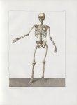 Planche 2 - Squelette - plan antérieur - Traité complet de l'anatomie de l'homme, par les Drs Bourge [...]