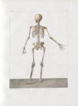 Planche 3 - Squelette - plan postérieur - Traité complet de l'anatomie de l'homme, par les Drs Bourg [...]