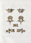 Planche 9 - Vertèbres - Troisième vertèbre lombaire d'un homme adulte - Traité complet de l'anatomie [...]